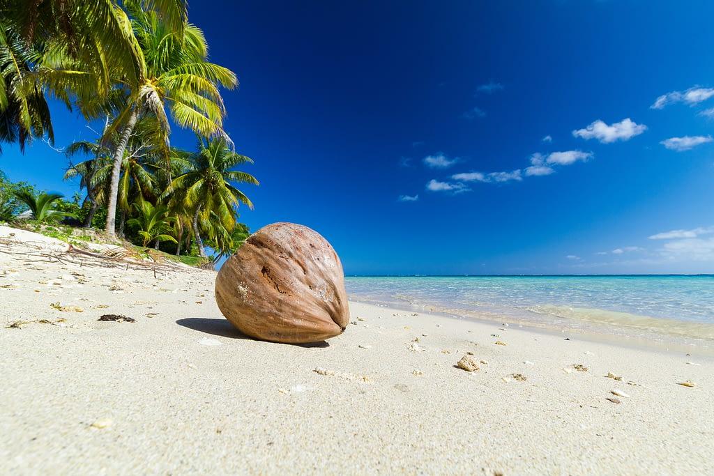 tipos de cocos