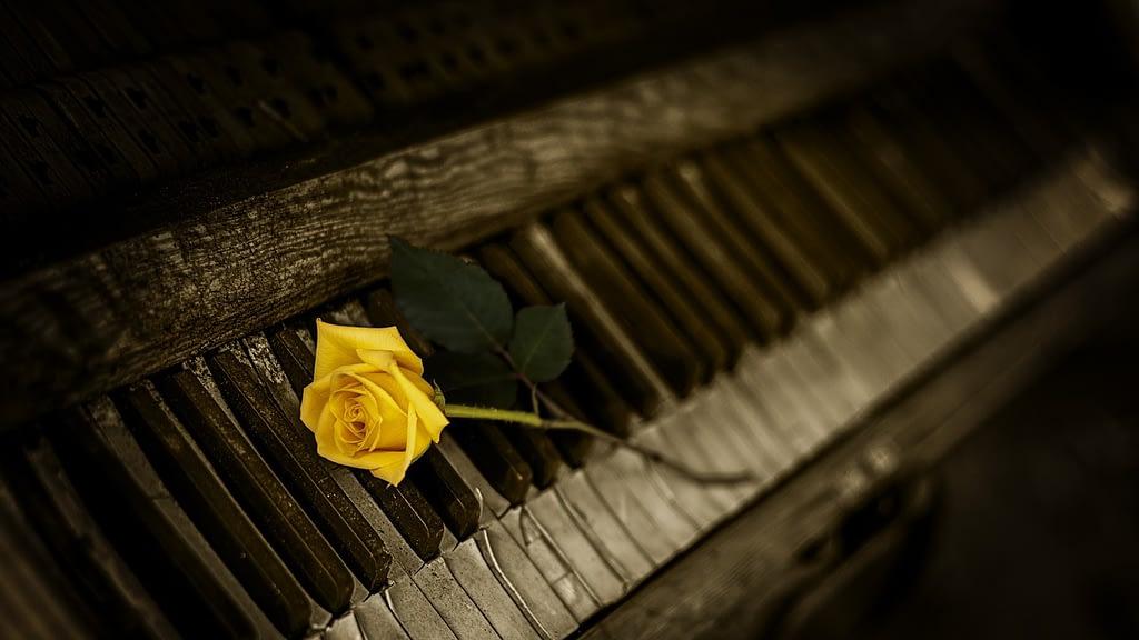 significado rosas amarillas