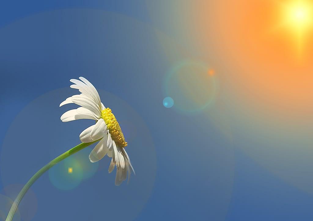 simbolismo flor margaritas sol