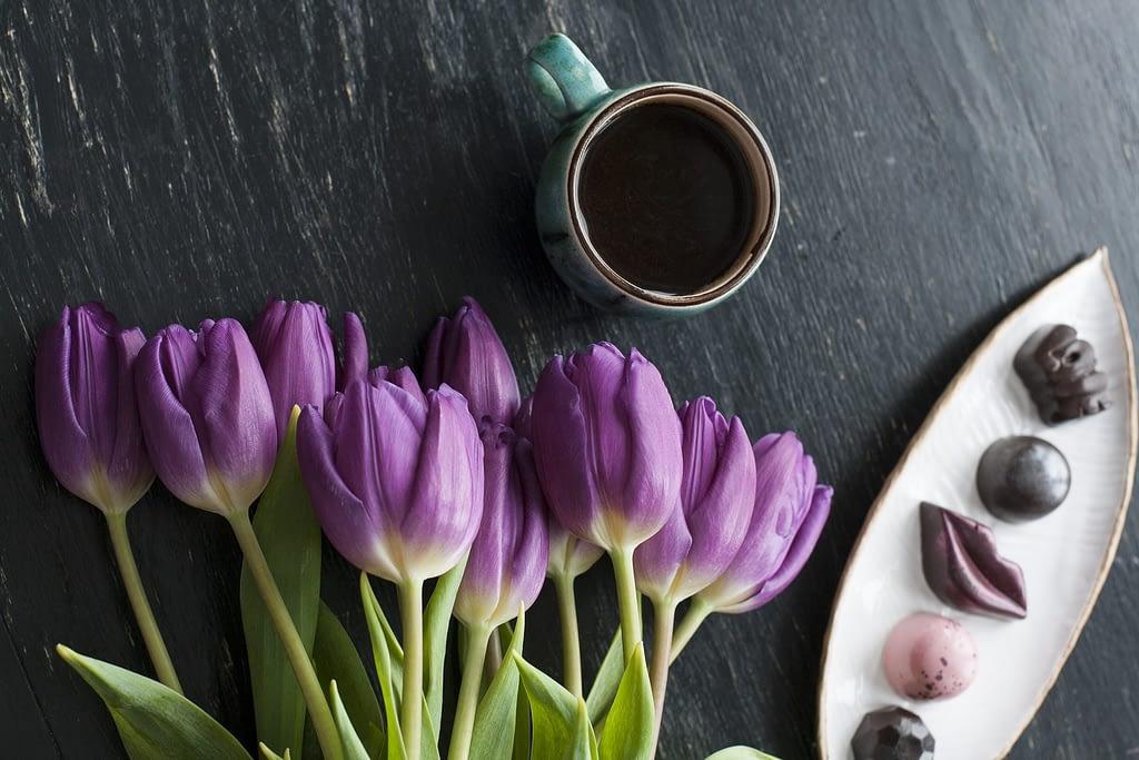 significado tulipan morado