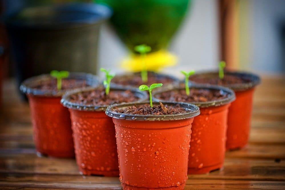 Como elegir la maceta para tu planta