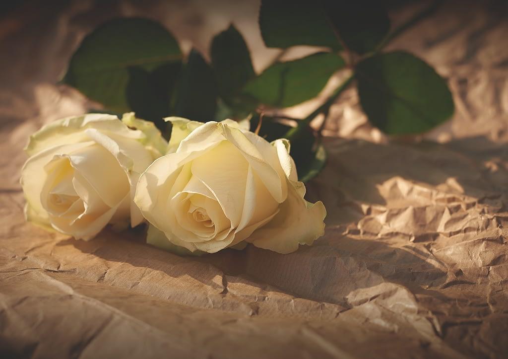 significado rosas blancas