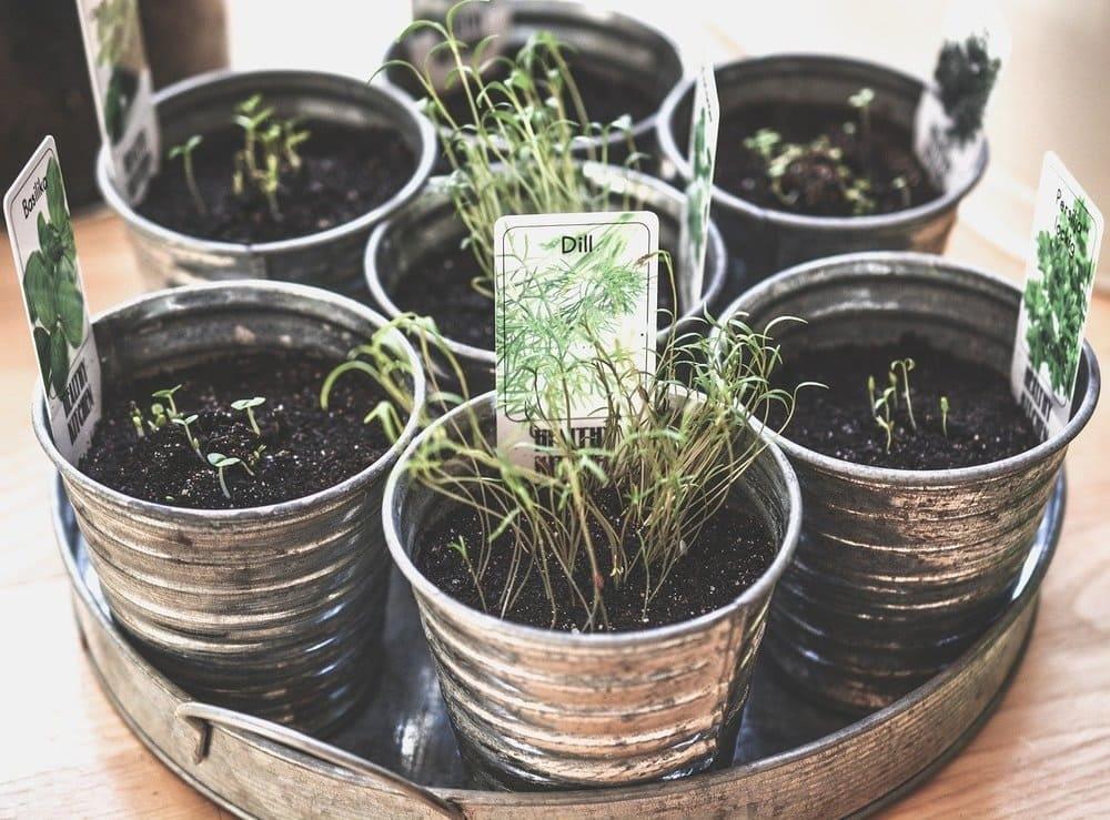 Crea un jardin de plantas aromaticas en casa