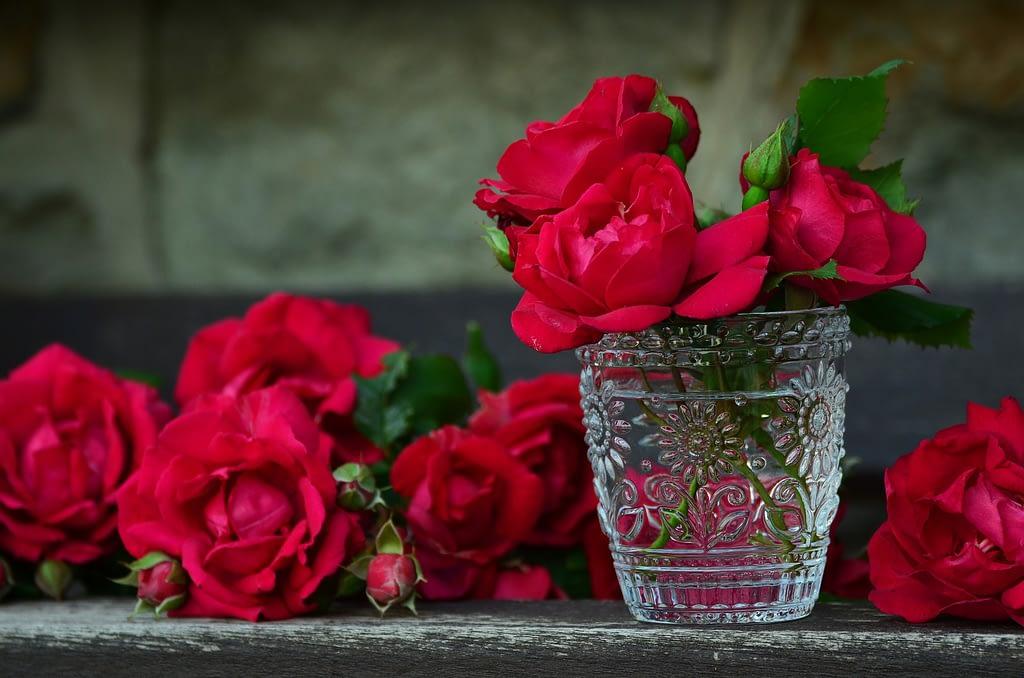 significado rosa roja