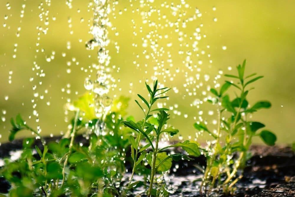 como cuidar de las plantas en verano